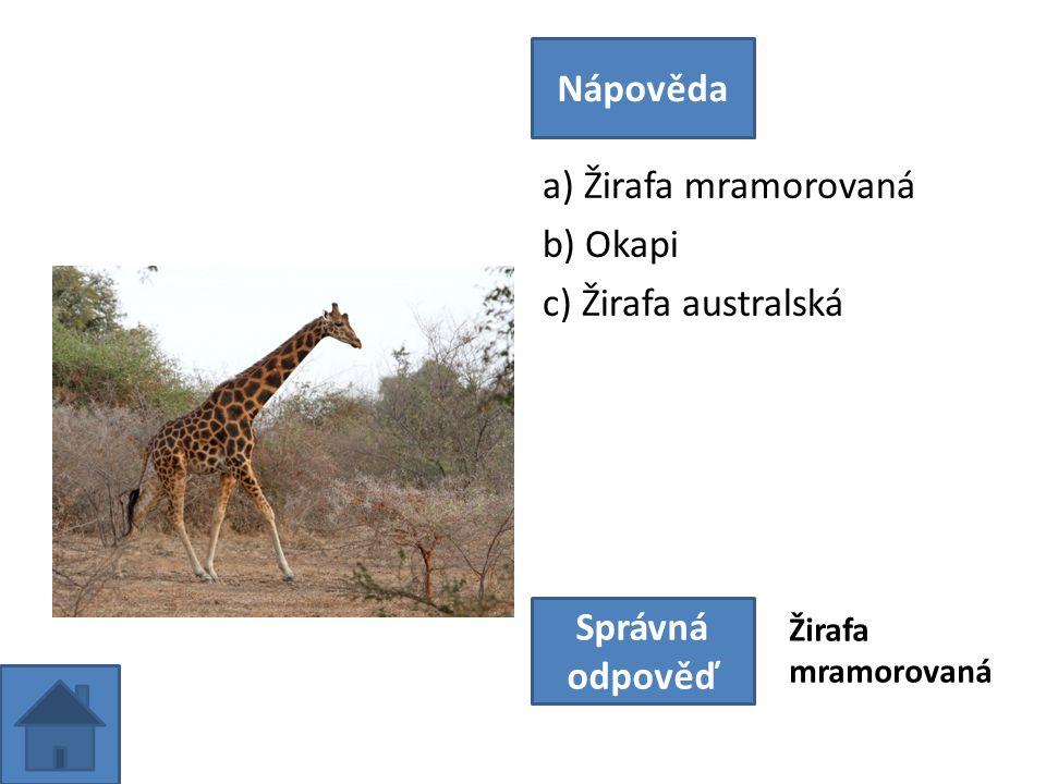 a) Žirafa mramorovaná b) Okapi c) Žirafa australská Nápověda Správná odpověď Žirafa mramorovaná