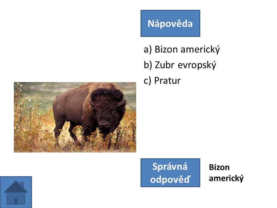 a) Bizon americký b) Zubr evropský c) Pratur Nápověda Správná odpověď Bizon americký