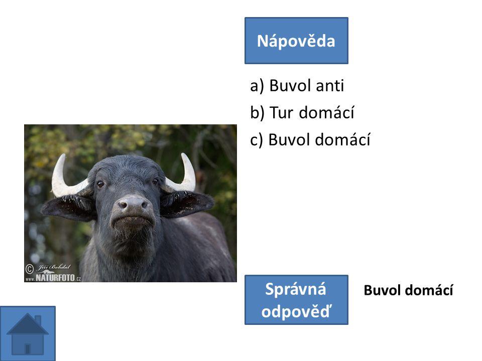 a) Buvol anti b) Tur domácí c) Buvol domácí Nápověda Správná odpověď Buvol domácí