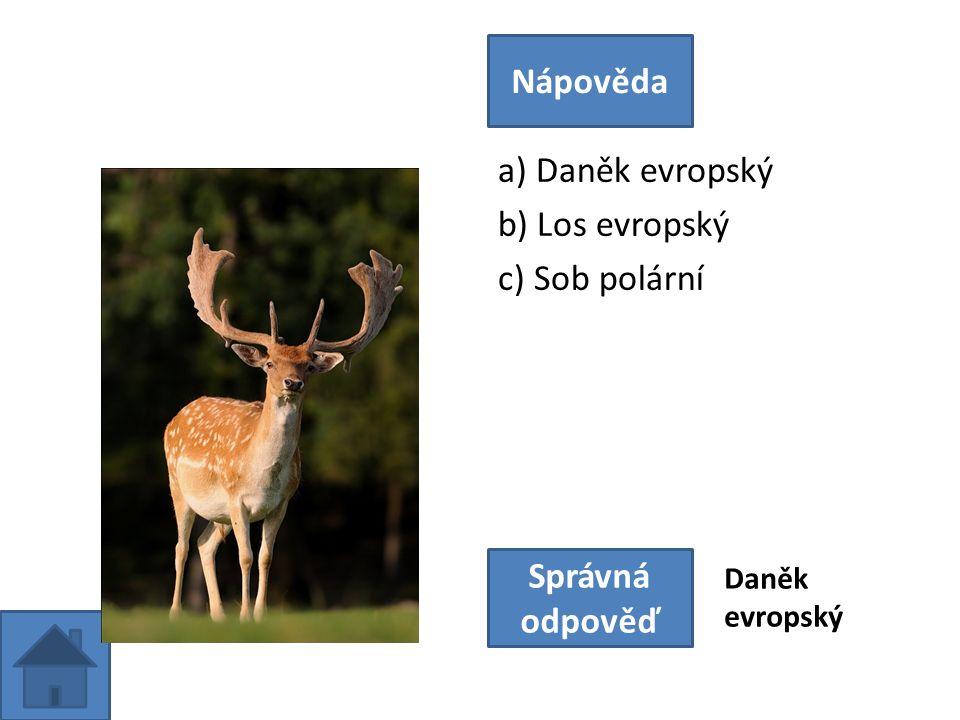 a) Daněk evropský b) Los evropský c) Sob polární Nápověda Správná odpověď Daněk evropský