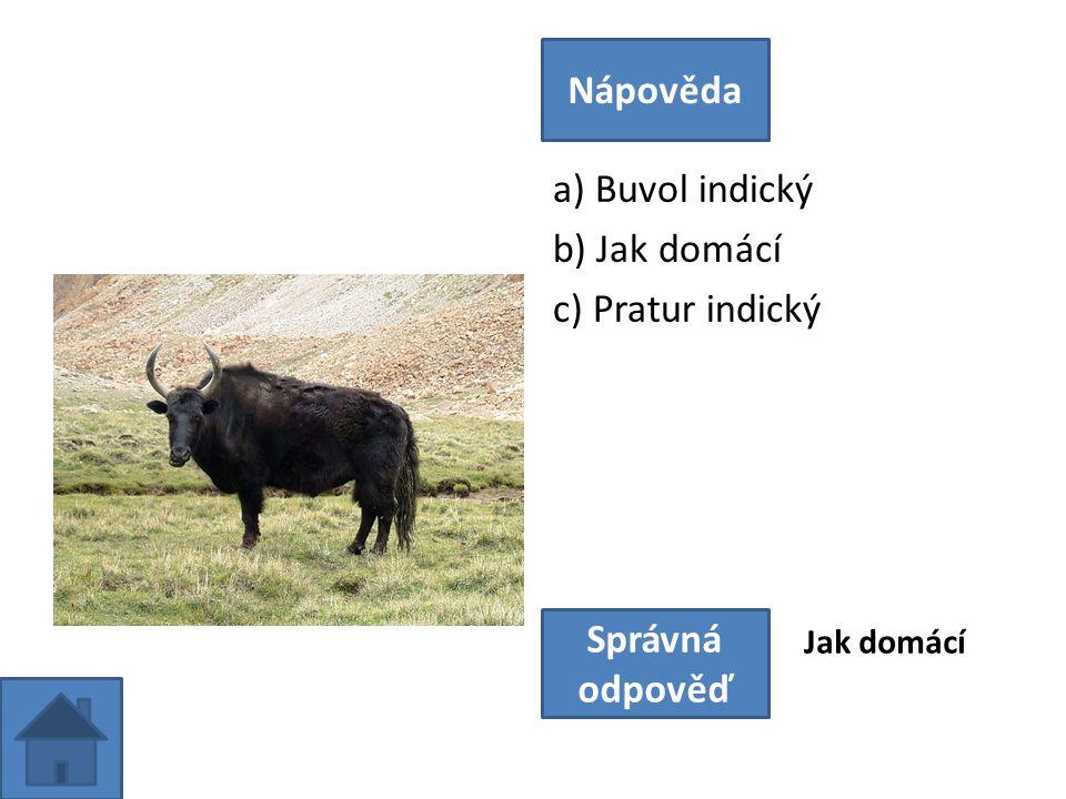 a) Buvol indický b) Jak domácí c) Pratur indický Nápověda Správná odpověď Jak domácí