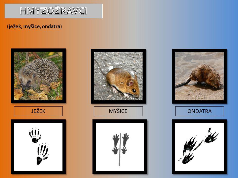 (ježek, myšice, ondatra) JEŽEKMYŠICEONDATRA