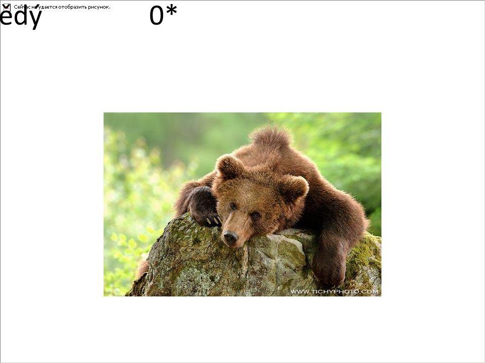 medvěd hnědý0*