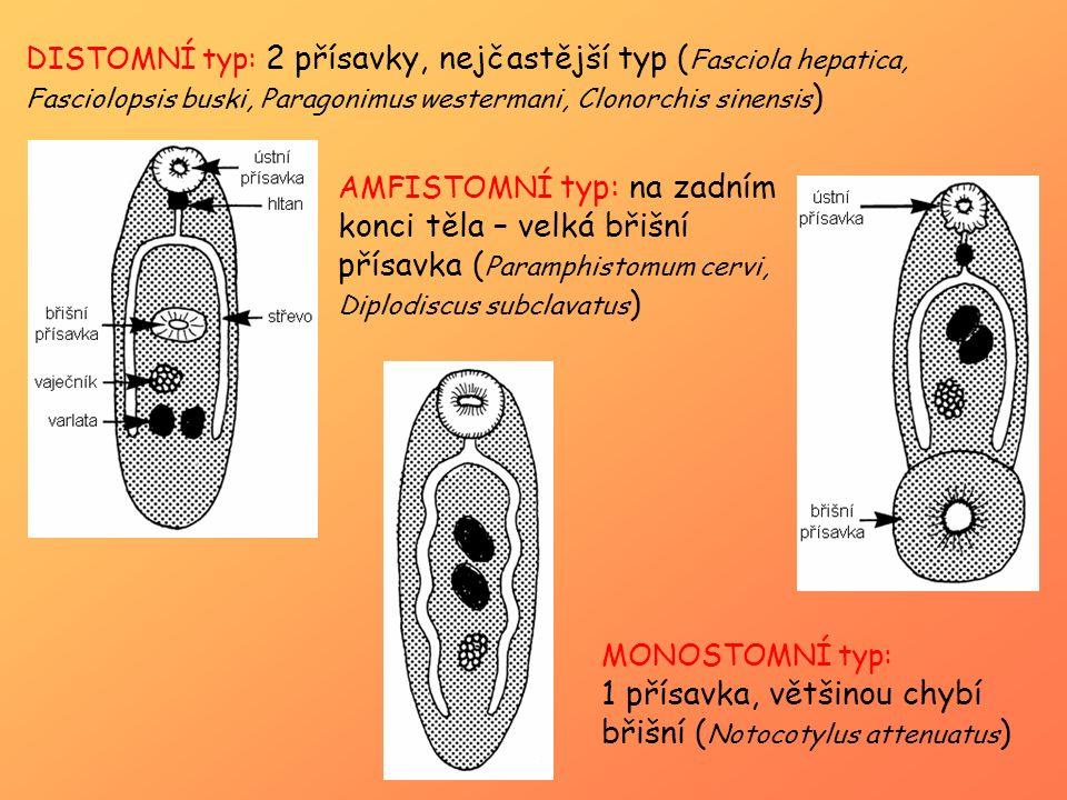 DISTOMNÍ typ: 2 přísavky, nejčastější typ ( Fasciola hepatica, Fasciolopsis buski, Paragonimus westermani, Clonorchis sinensis ) AMFISTOMNÍ typ: na za