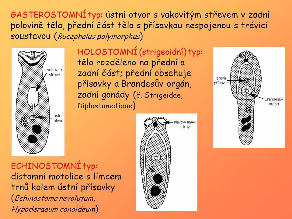 GASTEROSTOMNÍ typ: ústní otvor s vakovitým střevem v zadní polovině těla, přední část těla s přísavkou nespojenou s trávicí soustavou ( Bucephalus pol