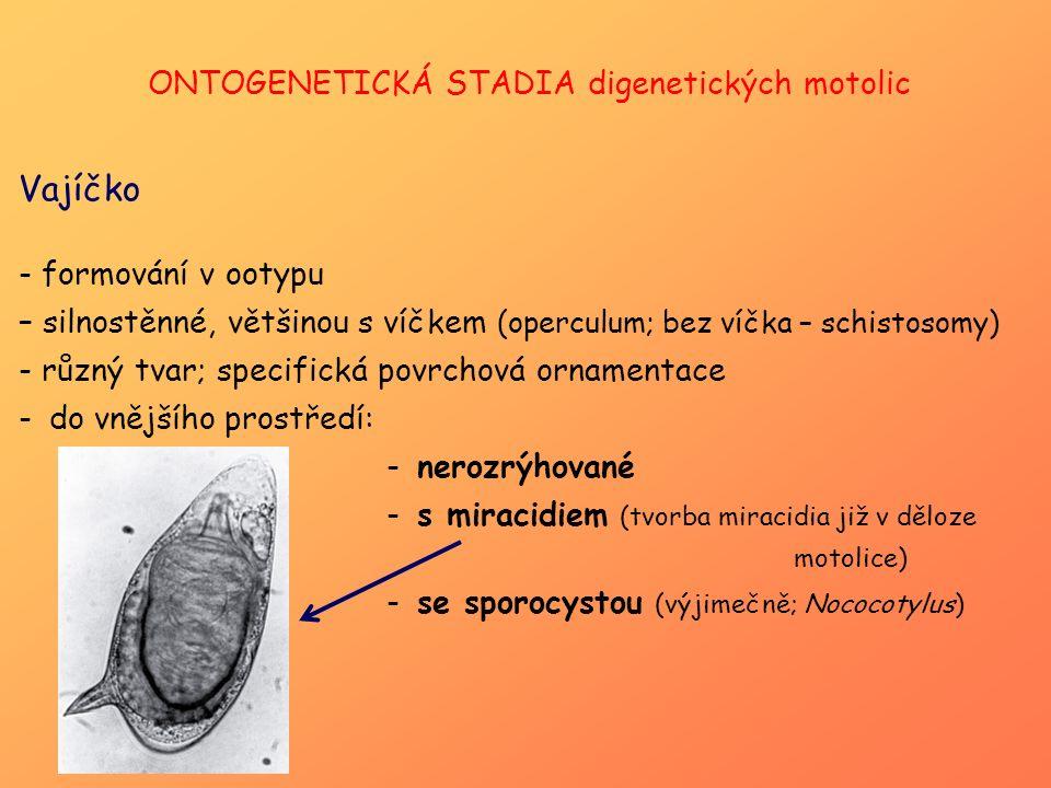ONTOGENETICKÁ STADIA digenetických motolic Vajíčko - formování v ootypu – silnostěnné, většinou s víčkem (operculum; bez víčka – schistosomy) - různý