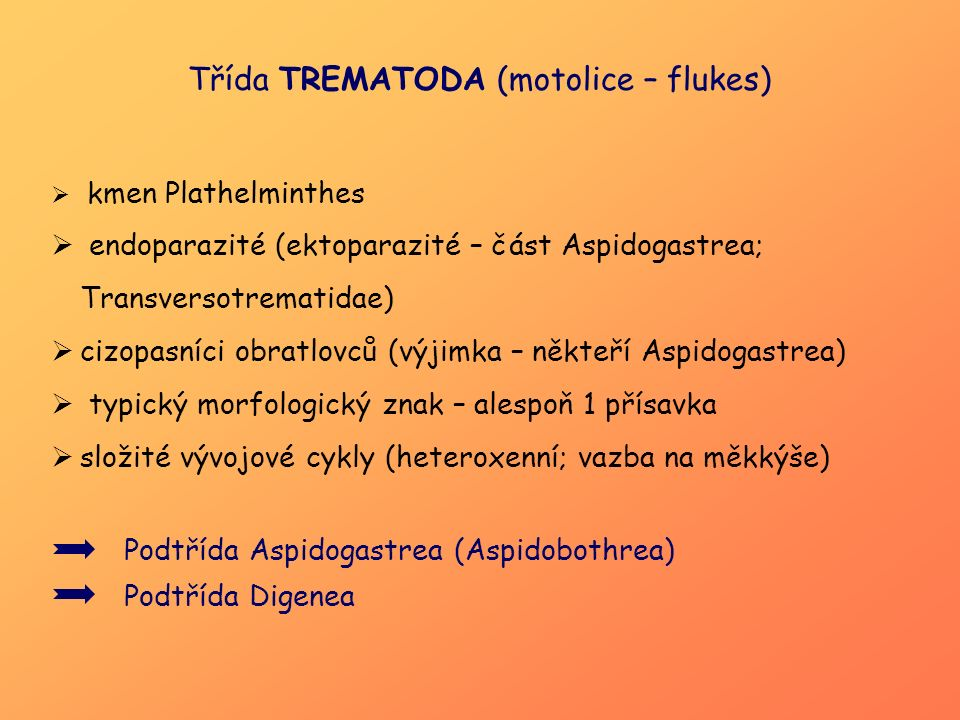 Podtřída Aspidogastrea (Aspidobothrea)  endoparazité poikilotermních živočichů (korýši, měkkýši, paryby, ryby, želvy)  znaky ploštěnek i parazitických digeneí  larva = kotylocidium, na zadním konci těla – přísavka  dospělec: ventrální strana těla – příchytný disk s četnými alveoly (Aspidogastridae) nebo podélné řady přísavek (Stichocotylidae)  VCpřímý – měkkýši, nákaza vajíčkem (Aspidogaster conchicola) nepřímý – kotylocidium (MH – není přesně znám), DH - obratlovci !!.