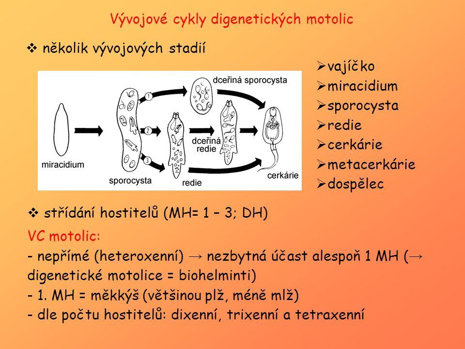 Vývojové cykly digenetických motolic  několik vývojových stadií  vajíčko  miracidium  sporocysta  redie  cerkárie  metacerkárie  dospělec  st