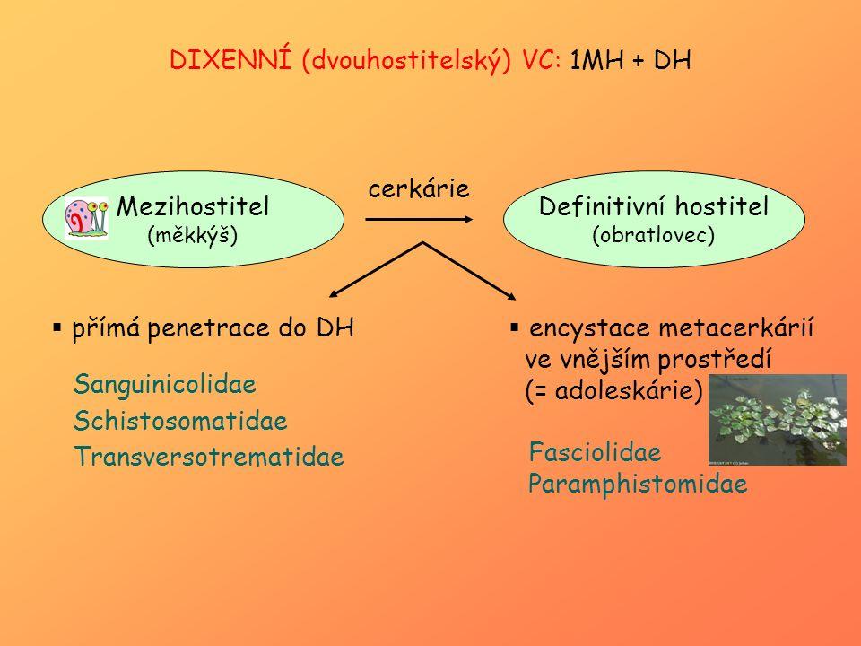 DIXENNÍ (dvouhostitelský) VC: 1MH + DH Mezihostitel (měkkýš) Definitivní hostitel (obratlovec) cerkárie  přímá penetrace do DH  encystace metacerkár