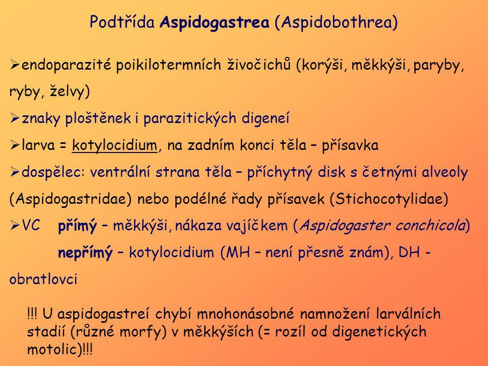 Podtřída Aspidogastrea (Aspidobothrea)  endoparazité poikilotermních živočichů (korýši, měkkýši, paryby, ryby, želvy)  znaky ploštěnek i parazitický