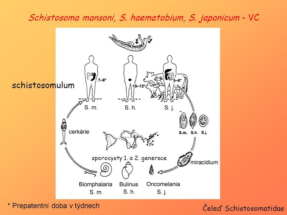 Schistosoma mansoni, S. haematobium, S. japonicum - VC Čeleď Schistosomatidae schistosomulum * Prepatentní doba v týdnech sporocysty 1. a 2. generace