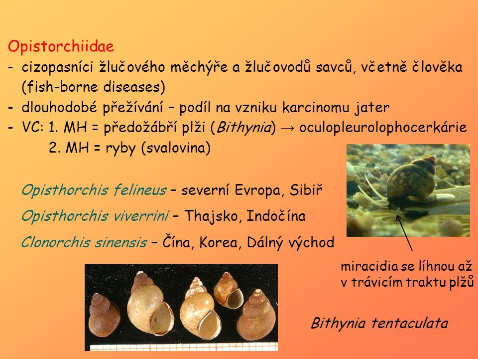 Opistorchiidae -cizopasníci žlučového měchýře a žlučovodů savců, včetně člověka (fish-borne diseases) -dlouhodobé přežívání – podíl na vzniku karcinom