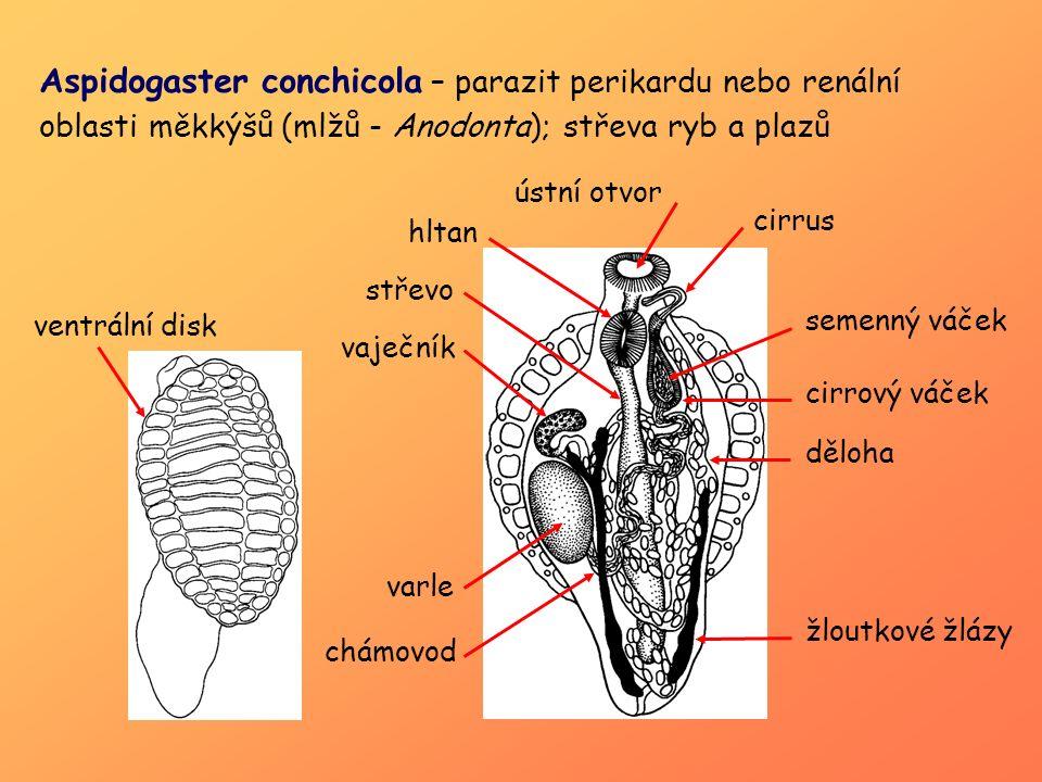 http://www.youtube.com/watch?v=EWB_COSUXMw&feature= player_embedded Leucochloridium paradoxum