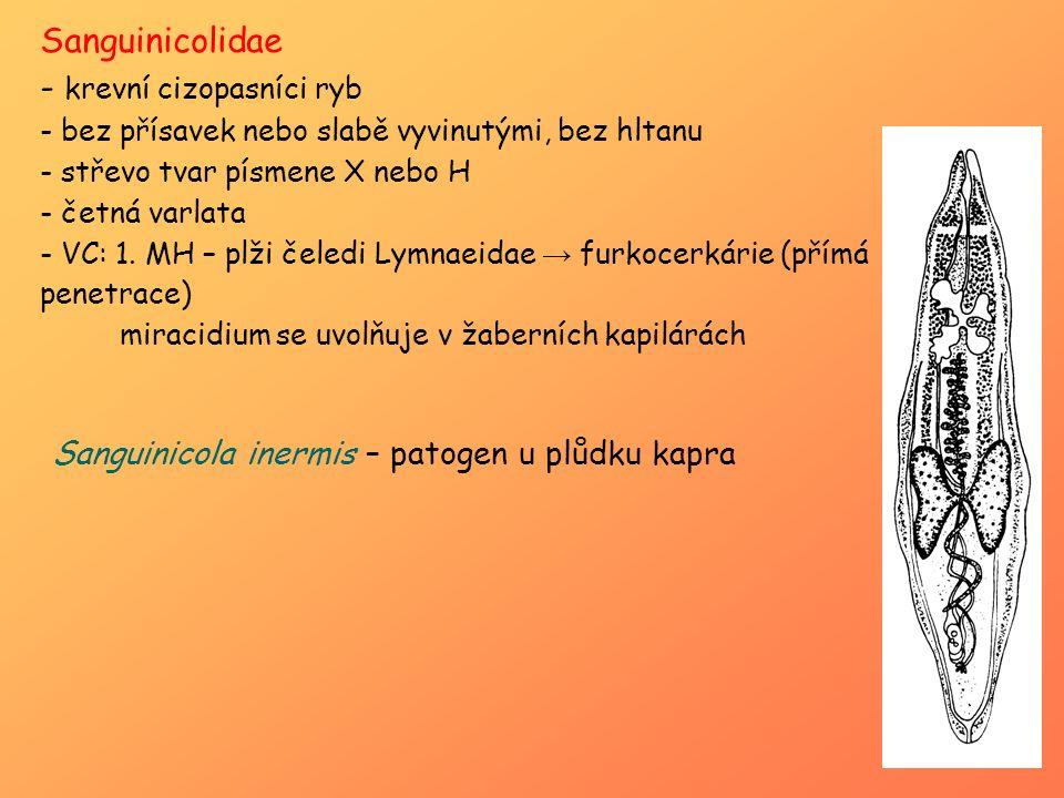 Sanguinicolidae - krevní cizopasníci ryb - bez přísavek nebo slabě vyvinutými, bez hltanu - střevo tvar písmene X nebo H - četná varlata - VC: 1. MH –