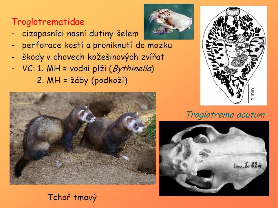 Troglotrematidae -cizopasníci nosní dutiny šelem -perforace kostí a proniknutí do mozku -škody v chovech kožešinových zvířat -VC: 1. MH = vodní plži (