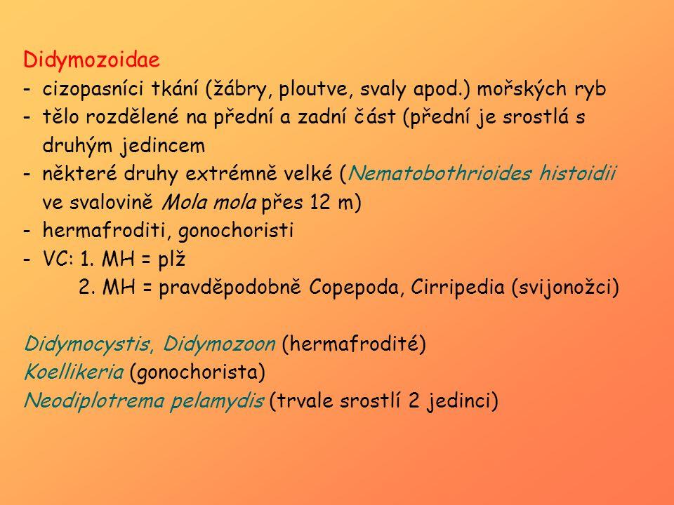 Didymozoidae -cizopasníci tkání (žábry, ploutve, svaly apod.) mořských ryb -tělo rozdělené na přední a zadní část (přední je srostlá s druhým jedincem