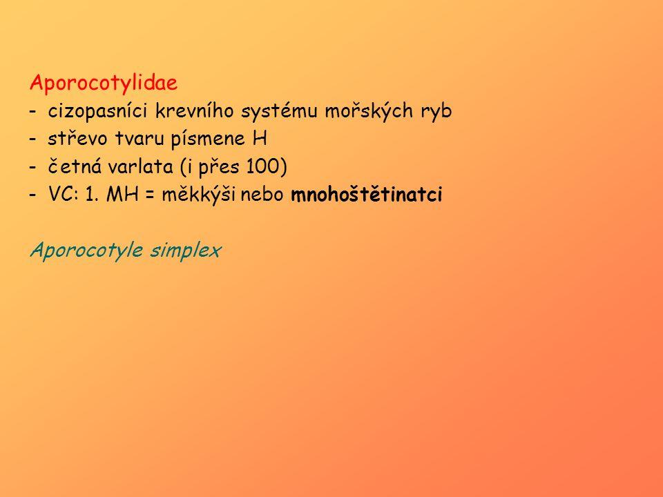 Aporocotylidae -cizopasníci krevního systému mořských ryb -střevo tvaru písmene H -četná varlata (i přes 100) -VC: 1. MH = měkkýši nebo mnohoštětinatc