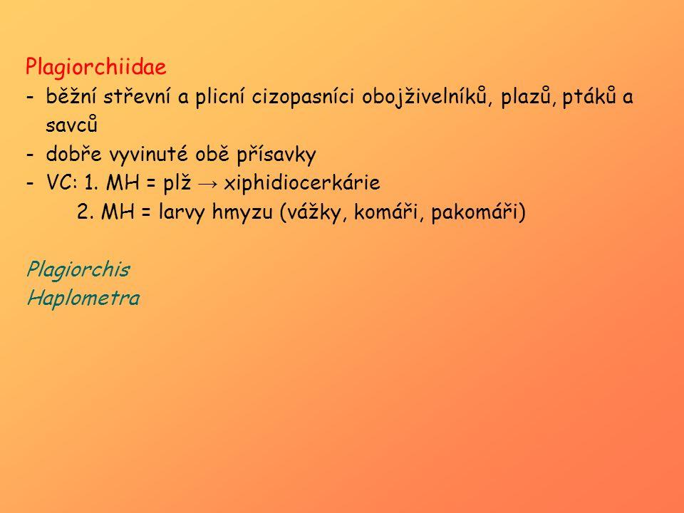 Plagiorchiidae -běžní střevní a plicní cizopasníci obojživelníků, plazů, ptáků a savců -dobře vyvinuté obě přísavky -VC: 1. MH = plž → xiphidiocerkári