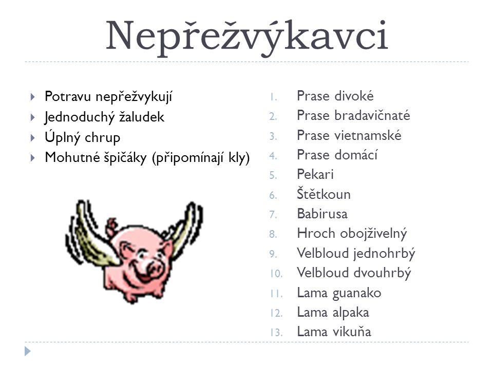 Nepřežvýkavci  Potravu nepřežvykují  Jednoduchý žaludek  Úplný chrup  Mohutné špičáky (připomínají kly) 1.