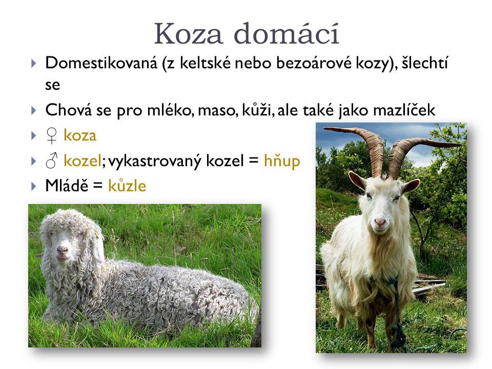 Koza domácí  Domestikovaná (z keltské nebo bezoárové kozy), šlechtí se  Chová se pro mléko, maso, kůži, ale také jako mazlíček  ♀ koza  ♂ kozel; vykastrovaný kozel = hňup  Mládě = kůzle