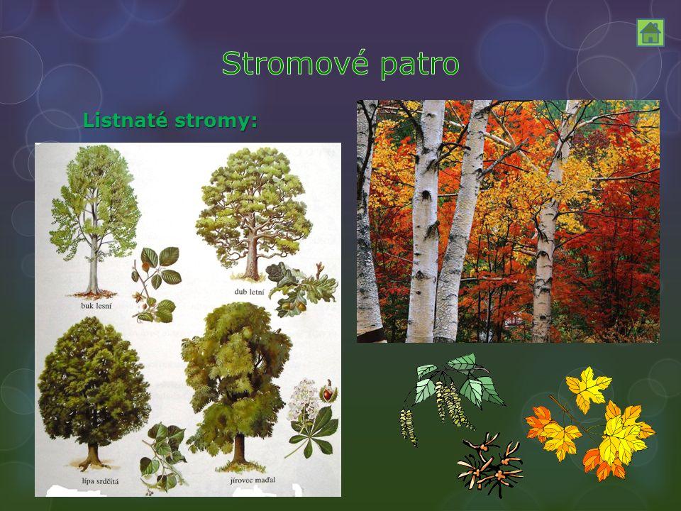 Listnaté stromy: