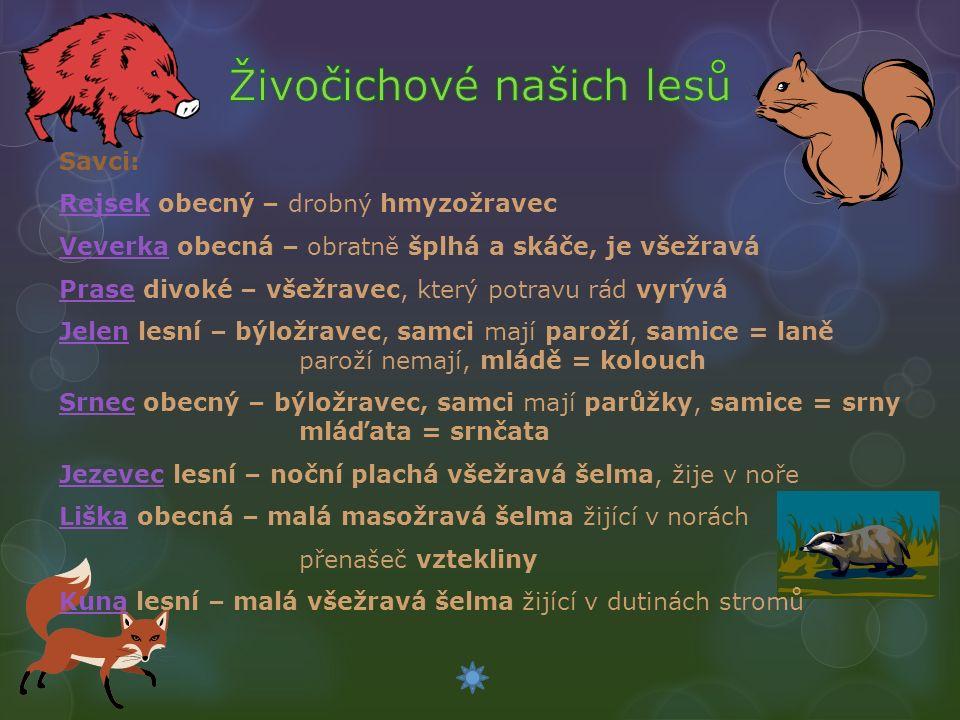 Savci: RejsekRejsek obecný – drobný hmyzožravec VeverkaVeverka obecná – obratně šplhá a skáče, je všežravá PrasePrase divoké – všežravec, který potravu rád vyrývá JelenJelen lesní – býložravec, samci mají paroží, samice = laně paroží nemají, mládě = kolouch SrnecSrnec obecný – býložravec, samci mají parůžky, samice = srny mláďata = srnčata JezevecJezevec lesní – noční plachá všežravá šelma, žije v noře LiškaLiška obecná – malá masožravá šelma žijící v norách přenašeč vztekliny KunaKuna lesní – malá všežravá šelma žijící v dutinách stromů