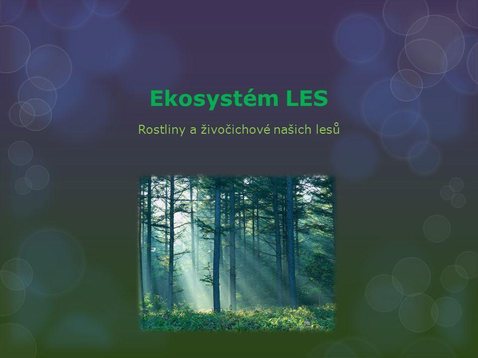 Ekosystém LES Rostliny a živočichové našich lesů