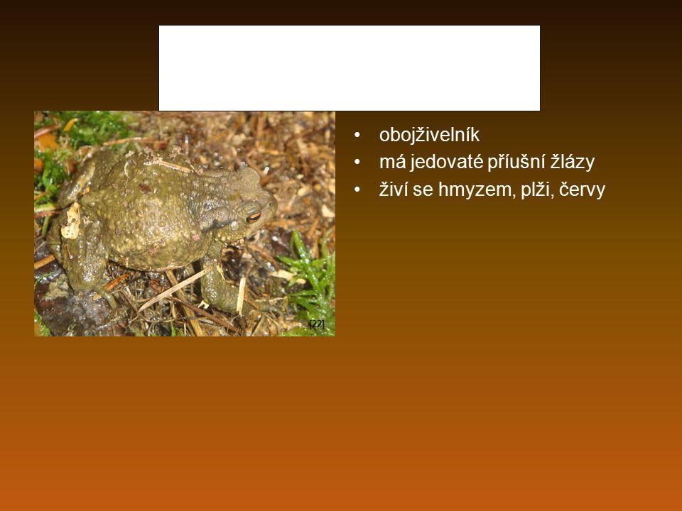 Ropucha obecná obojživelník má jedovaté příušní žlázy živí se hmyzem, plži, červy [22]