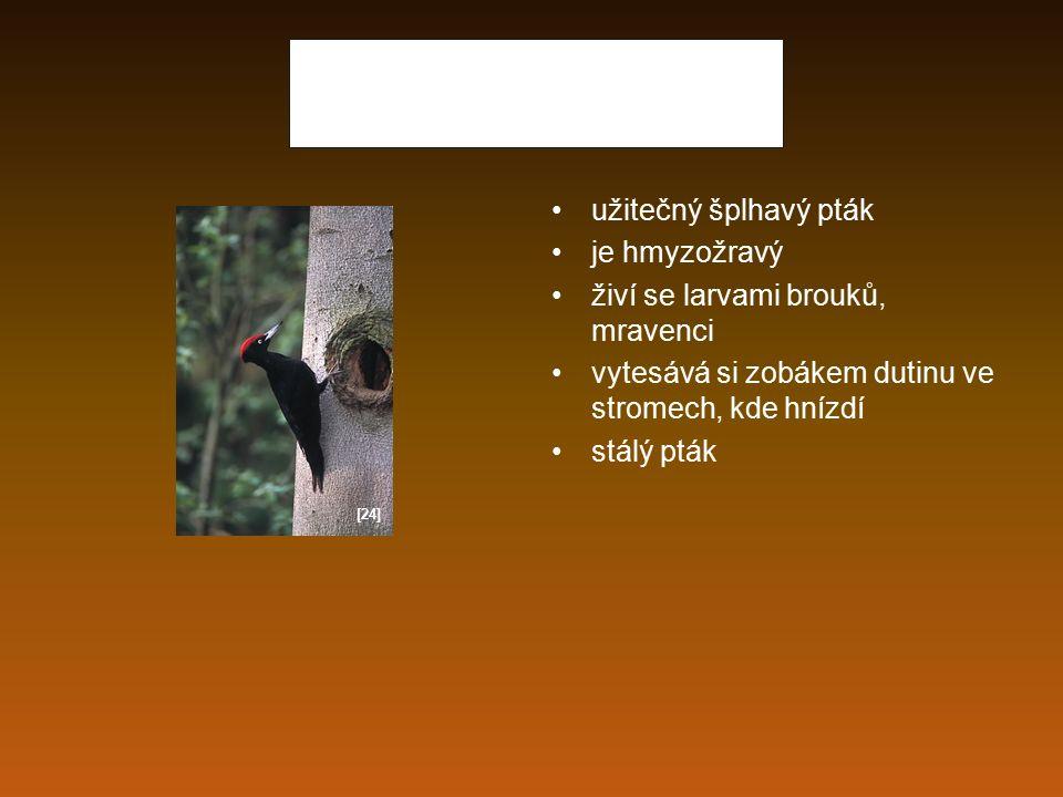 Datel černý užitečný šplhavý pták je hmyzožravý živí se larvami brouků, mravenci vytesává si zobákem dutinu ve stromech, kde hnízdí stálý pták [24]