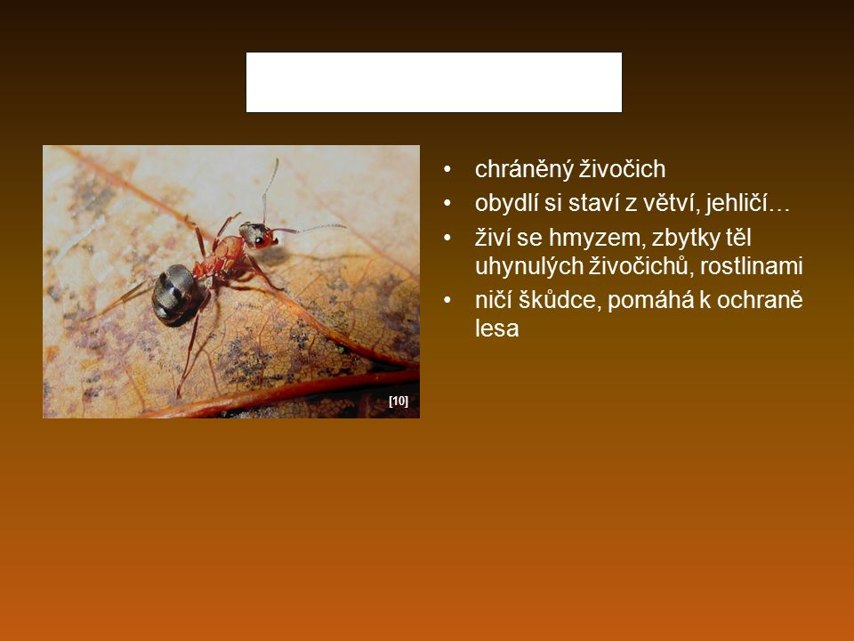 Mravenec lesní chráněný živočich obydlí si staví z větví, jehličí… živí se hmyzem, zbytky těl uhynulých živočichů, rostlinami ničí škůdce, pomáhá k oc