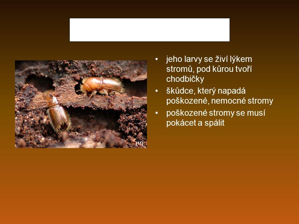 Prase divoké má rádo bahnitá místa všežravec živí se lesními plody, kořínky, obojživelníky a hraboši vyrývá rypákem různé hlízy, larvy a kukly hmyzu sudokopytník lovná zvěř [12]
