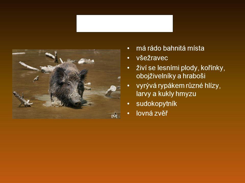 Jelen lesní býložravec žije v lesích i na loukách živí trávou, bylinami, lesními plody, větvemi sudokopytník vyskytuje se v horách a výše položených lesích samci mají parohy, které na konci zimy shazují lovná zvěř [13]