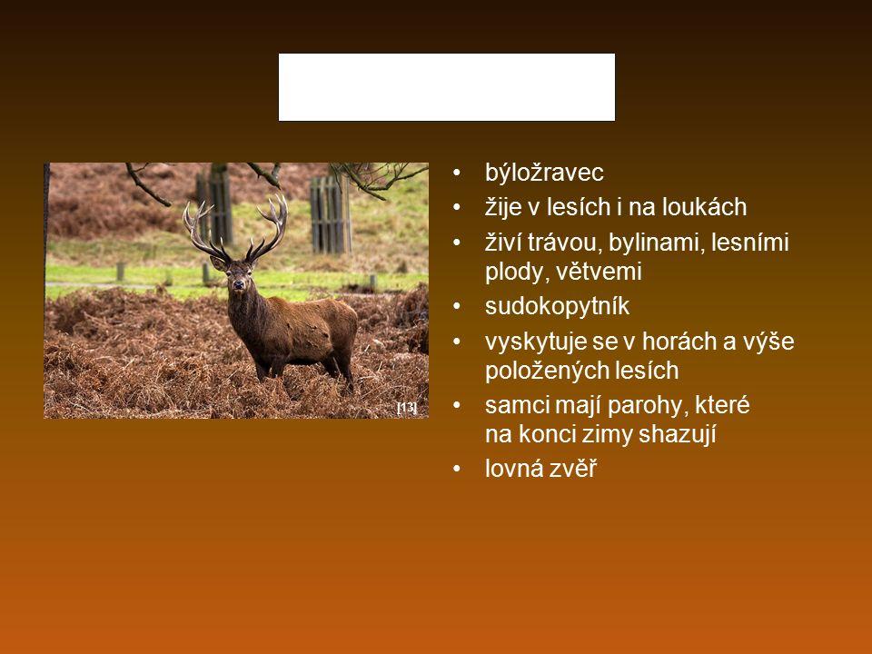 Srnec obecný žije na polích, loukách, v lese býložravec, přežvýkavec, živí se bylinami sudokopytník patří mezi lovnou zvěř samec má krátké parůžky, které na podzim shazuje samice parůžky nemá [14]