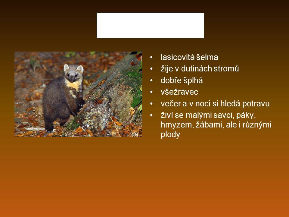 Jezevec lesní kunovitá šelma všežravec živí se hmyzem, hraboši, semen, houbami, kořínky noční zvíře vyhrabává si noru přerušovaným spánkem spí během zimy [17]