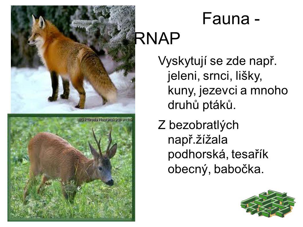 Fauna - KRNAP Vyskytují se zde např. jeleni, srnci, lišky, kuny, jezevci a mnoho druhů ptáků.
