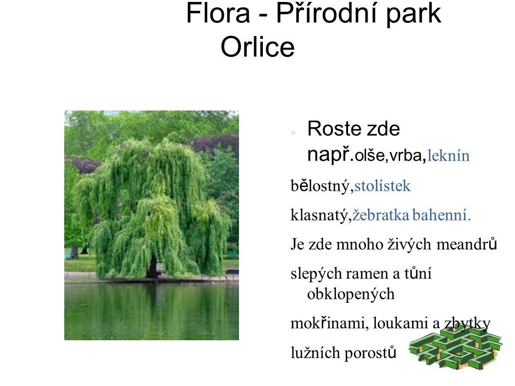 Flora - Přírodní park Orlice ● Roste zde např.