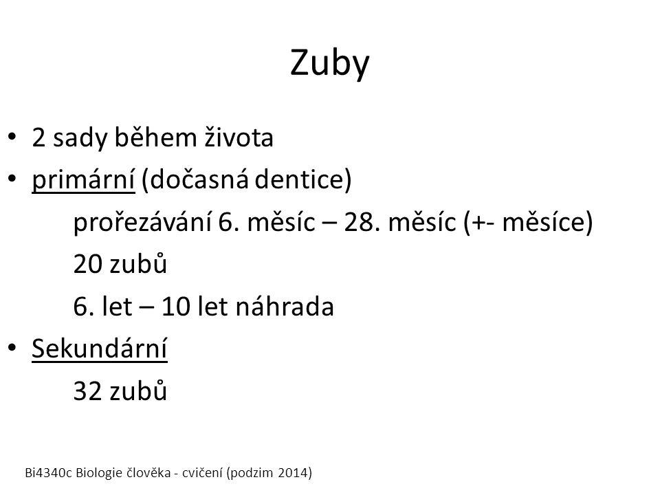 Zuby 2 sady během života primární (dočasná dentice) prořezávání 6.