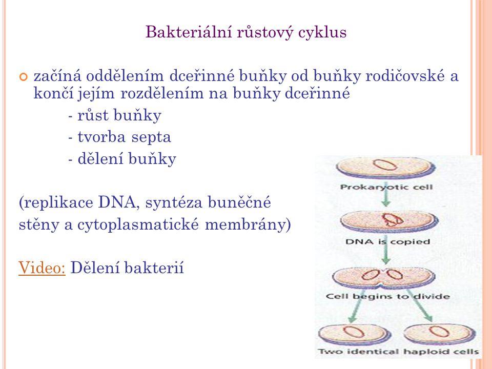 Bakteriální růstový cyklus začíná oddělením dceřinné buňky od buňky rodičovské a končí jejím rozdělením na buňky dceřinné - růst buňky - tvorba septa