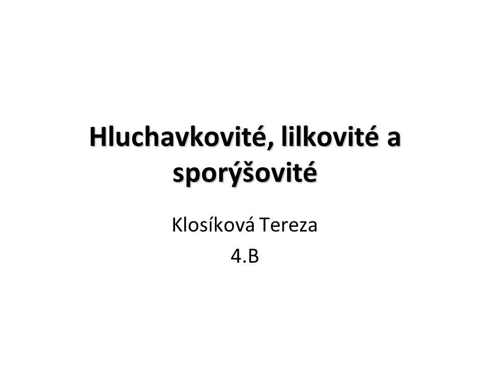 Hluchavkovité, lilkovité a sporýšovité Klosíková Tereza 4.B