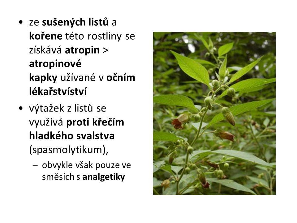 ze sušených listů a kořene této rostliny se získává atropin > atropinové kapky užívané v očním lékařstvíství výtažek z listů se využívá proti křečím hladkého svalstva (spasmolytikum), –obvykle však pouze ve směsích s analgetiky