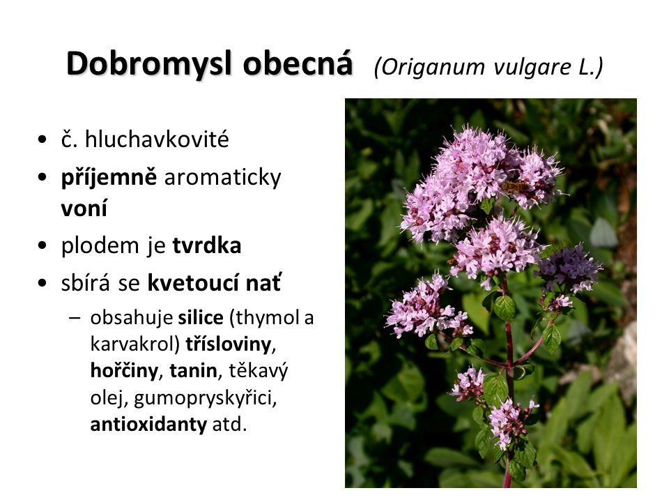 Dobromysl obecná Dobromysl obecná (Origanum vulgare L.) č.