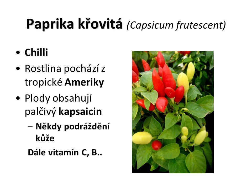 Paprika křovitá Paprika křovitá (Capsicum frutescent) Chilli Rostlina pochází z tropické Ameriky Plody obsahují palčivý kapsaicin –Někdy podráždění kůže Dále vitamín C, B..