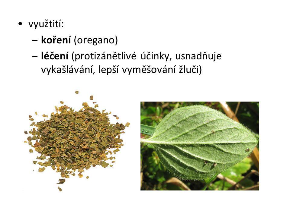 Saturejka zahradní Saturejka zahradní (Satureia hortensis L.) č.