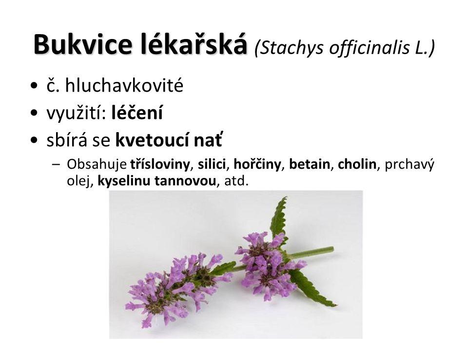 Bukvice lékařská Bukvice lékařská (Stachys officinalis L.) č.