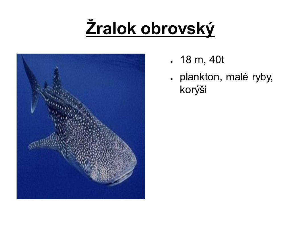 Žralok obrovský ● 18 m, 40t ● plankton, malé ryby, korýši