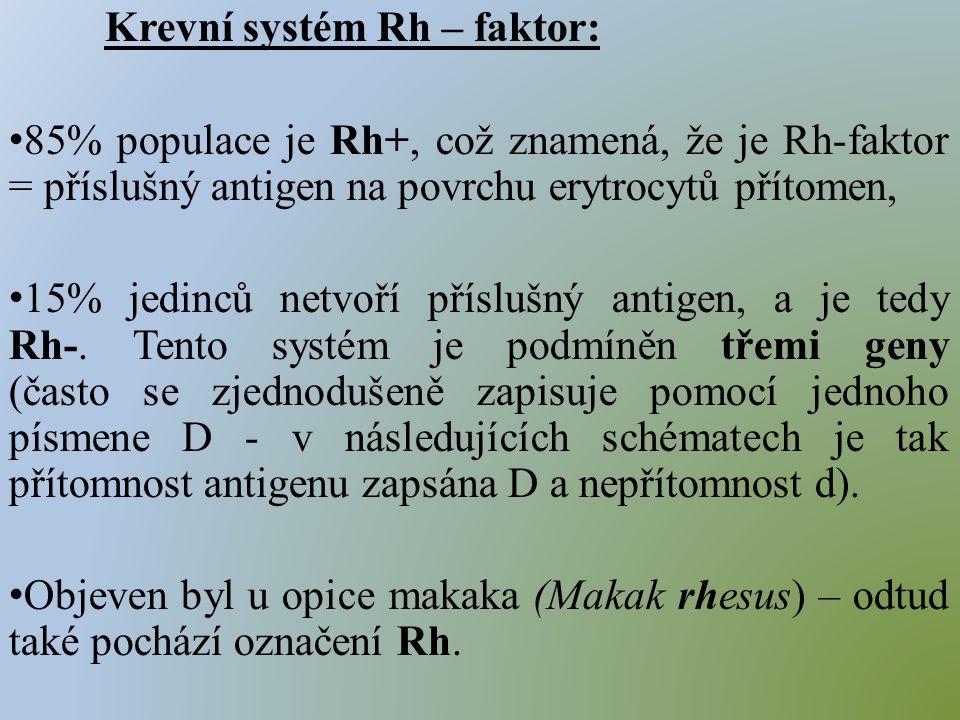 Krevní systém Rh – faktor: 85% populace je Rh+, což znamená, že je Rh-faktor = příslušný antigen na povrchu erytrocytů přítomen, 15% jedinců netvoří příslušný antigen, a je tedy Rh-.