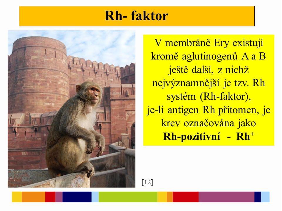 Rh- faktor [12] [13] V membráně Ery existují kromě aglutinogenů A a B ještě další, z nichž nejvýznamnější je tzv.