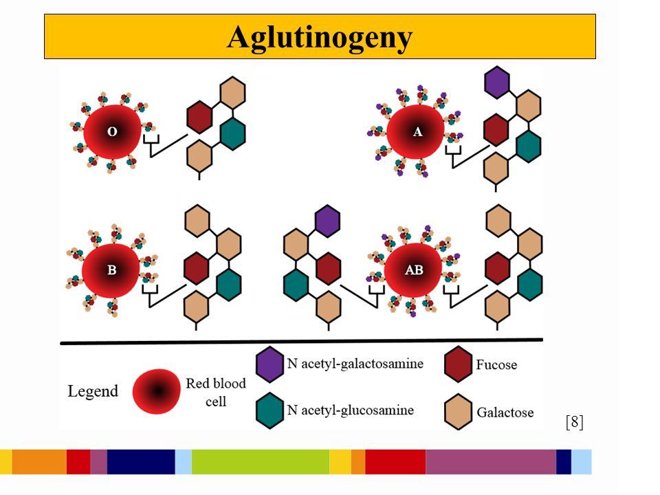 Aglutininy [7] protilátky anti-A, anti-B vyskytují se v krevní plazmě mají bílkovinnou povahu setká-li se aglutinogen s příslušným aglutininem, nastává shluknutí - aglutinace erytrocytů a jejich hemolýza