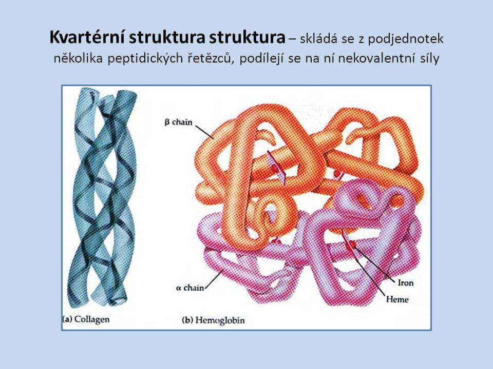 Kvartérní struktura struktura – skládá se z podjednotek několika peptidických řetězců, podílejí se na ní nekovalentní síly