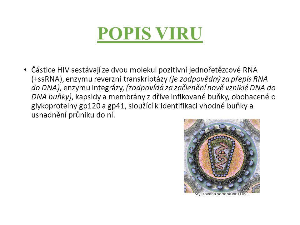 POPIS VIRU Částice HIV sestávají ze dvou molekul pozitivní jednořetězcové RNA (+ssRNA), enzymu reverzní transkriptázy (je zodpovědný za přepis RNA do DNA), enzymu integrázy, (zodpovídá za začlenění nově vzniklé DNA do DNA buňky), kapsidy a membrány z dříve infikované buňky, obohacené o glykoproteiny gp120 a gp41, sloužící k identifikaci vhodné buňky a usnadnění průniku do ní.